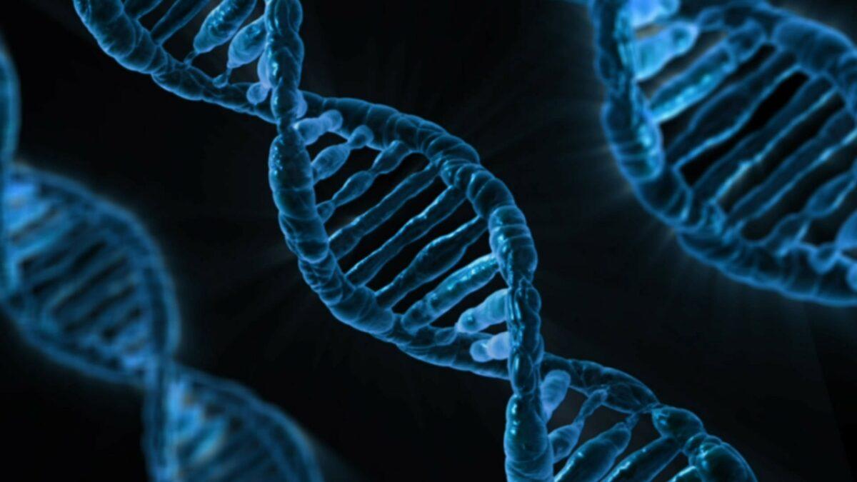 fragmentacion adn esperma